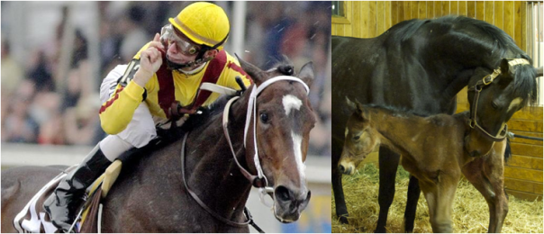 Rachel Alexandra, 2009 Preakness Stakes Winner and Mother (Dam)