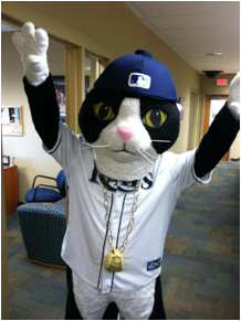Tampa Bay Rays Mascot DJ Kitty